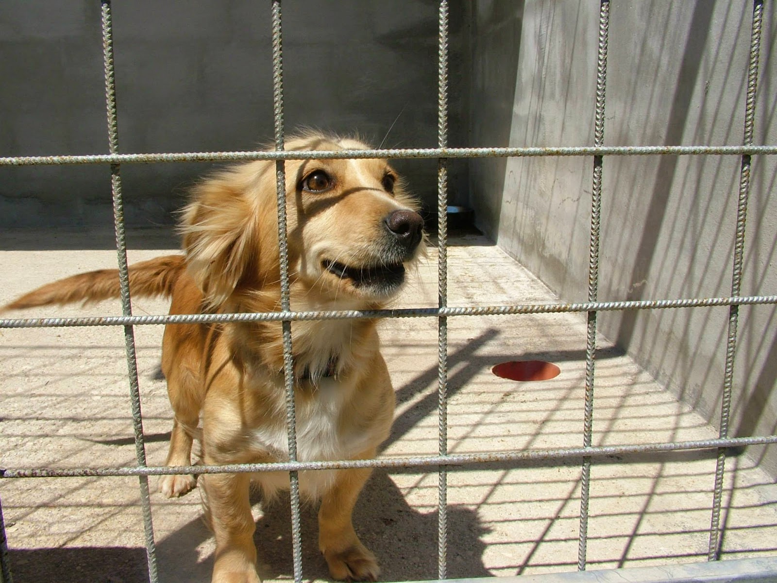 cane piccolo canina adozione canile
