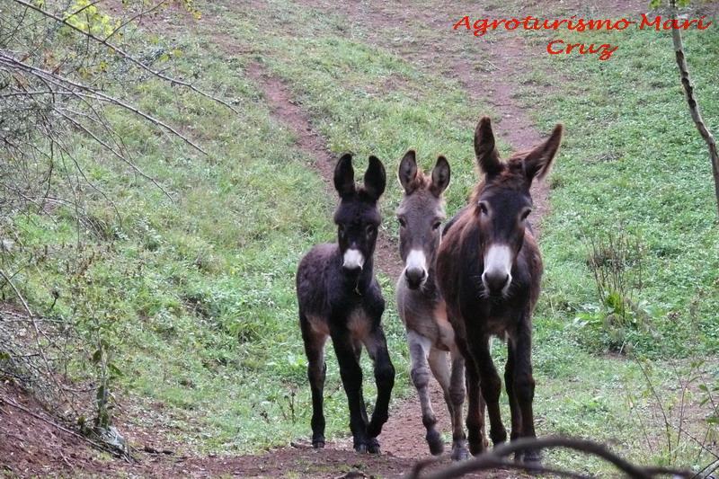 Tenemos nuevos cabritos.Visita fotográfica por la granja.  