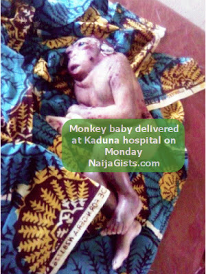 monkey like baby in kaduna