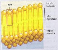 komponen lipid