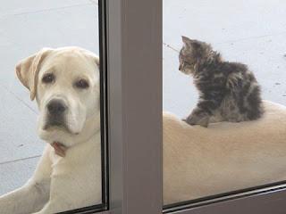 Χάθηκε το σκυλάκι της φωτογραφίας στην περιοχή Στρόβολος στη Λευκωσία. Είναι αρσενικό, 1,5 έτους και ακούει στο όνομα Λιο.