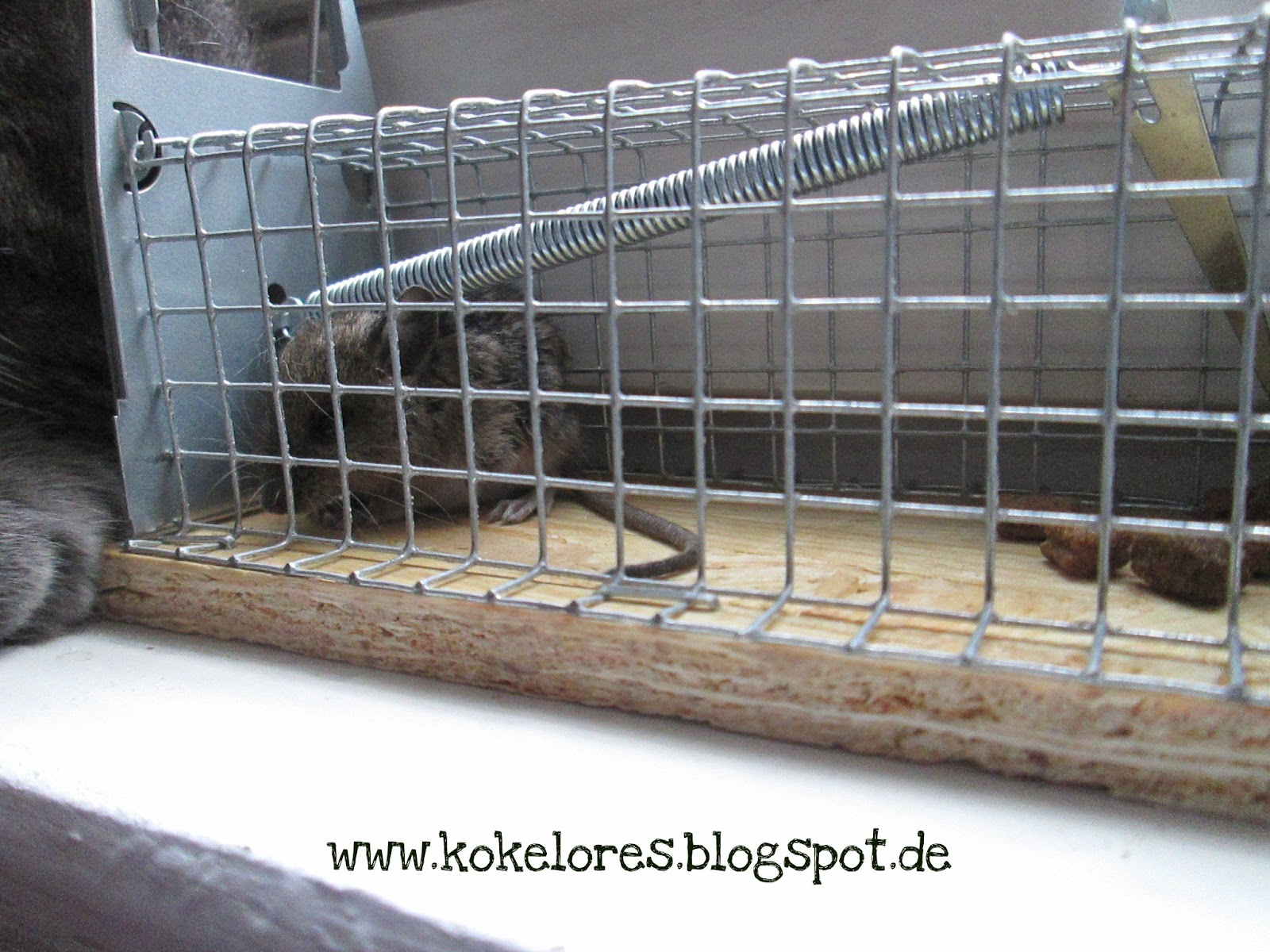 kokelores kunst kitsch katzen von der maus die aus der k lte kam. Black Bedroom Furniture Sets. Home Design Ideas