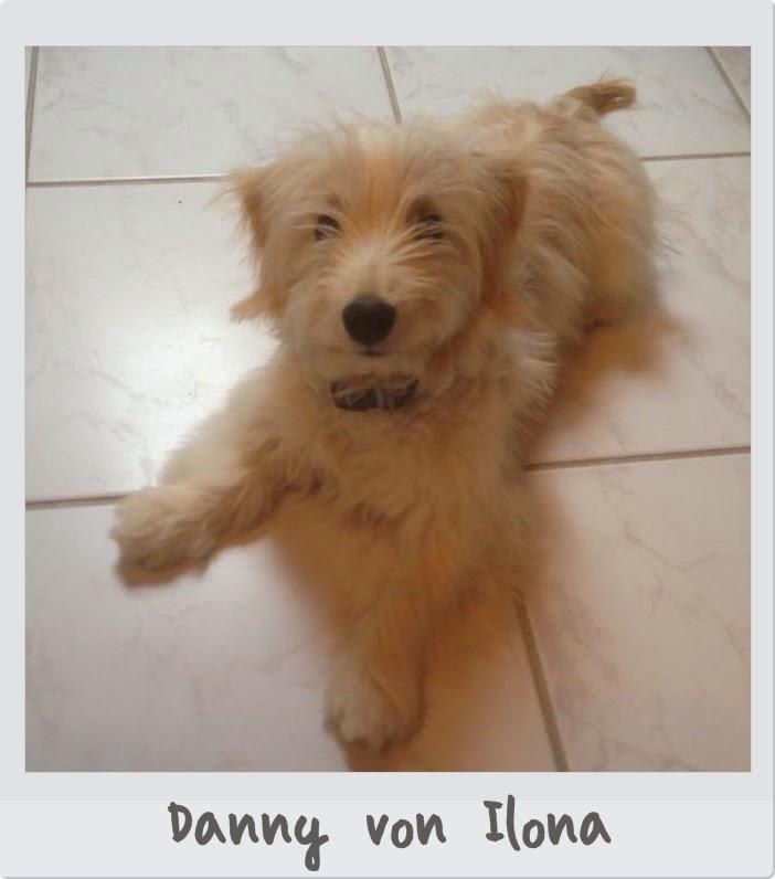 Hund-Danny von Ilona