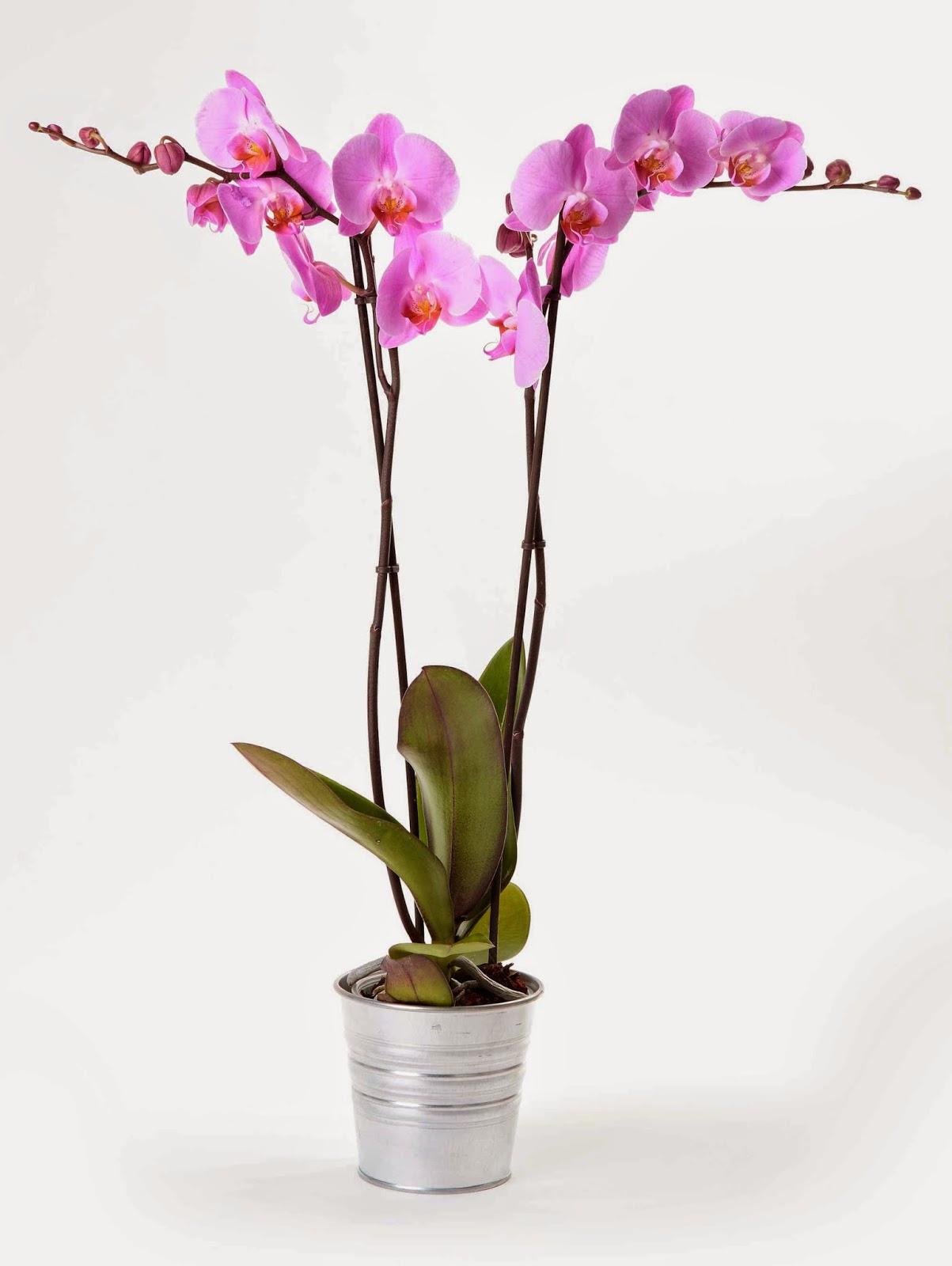 http://floresmarien.es/Plantas