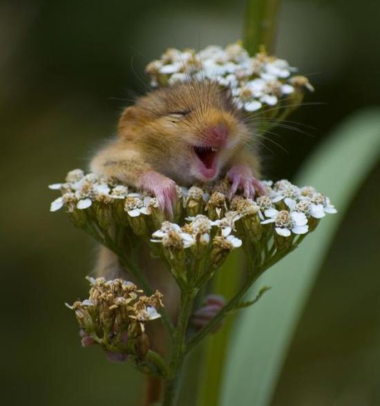 Basta poco per essere felici !