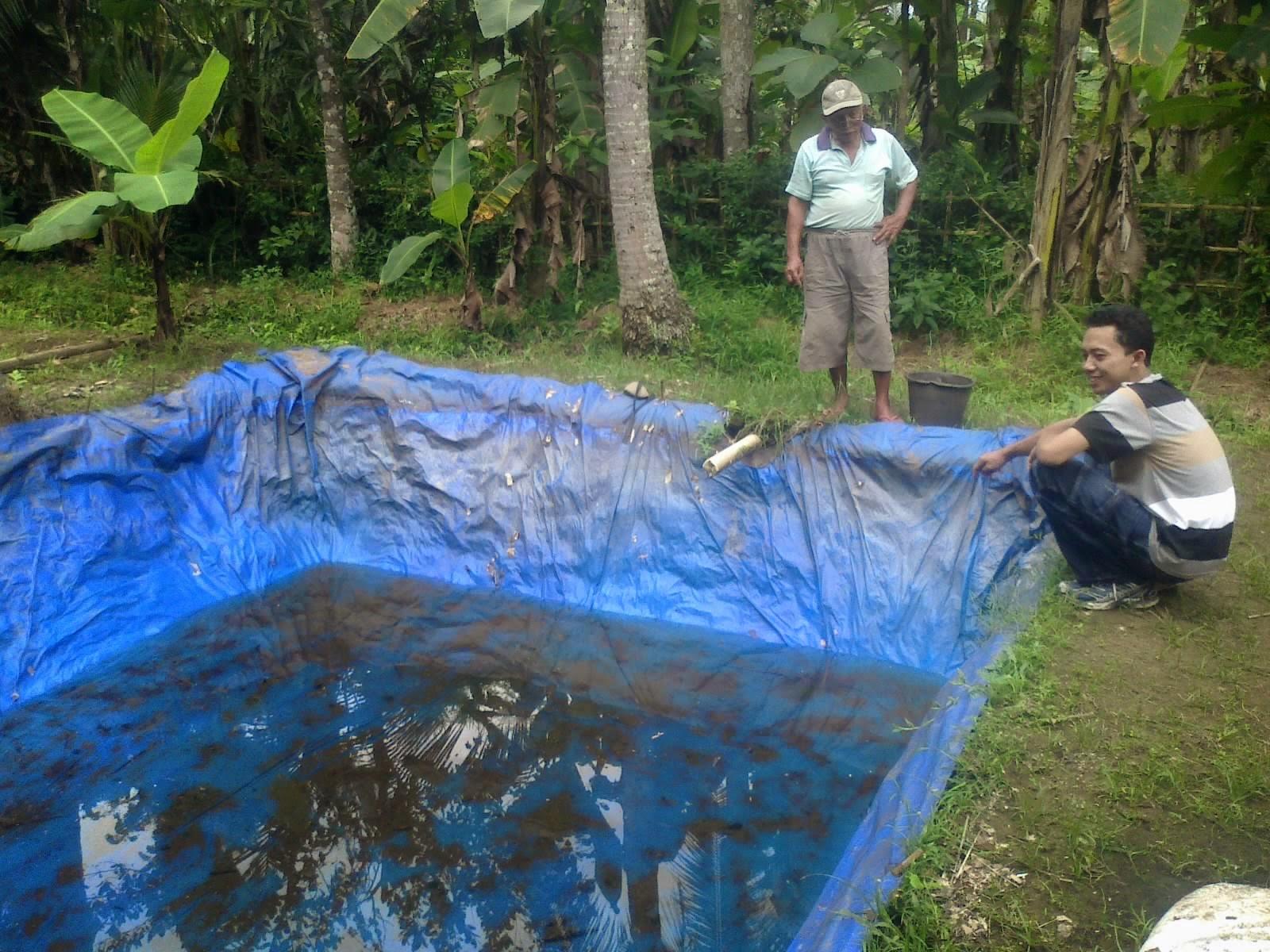 Cara Beternak Ikan Gabus Di Kolam Terpal