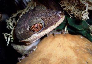 Penemuan Species Di Nusantara 2012