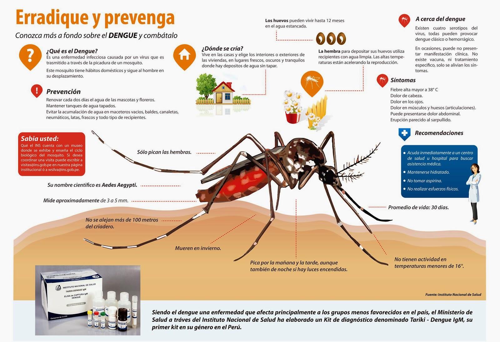 Aedes aegypti y el dengue