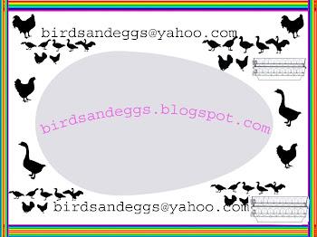 birdsandeggs.blogspot.com