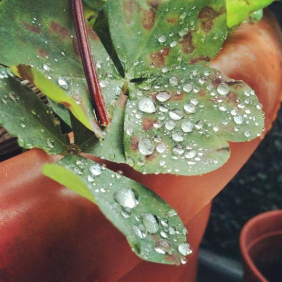 nature,rain drops,Santiago, Chile, iPhoneography Selection January 7 2013,pablolarah,Pablo Lara H Blog