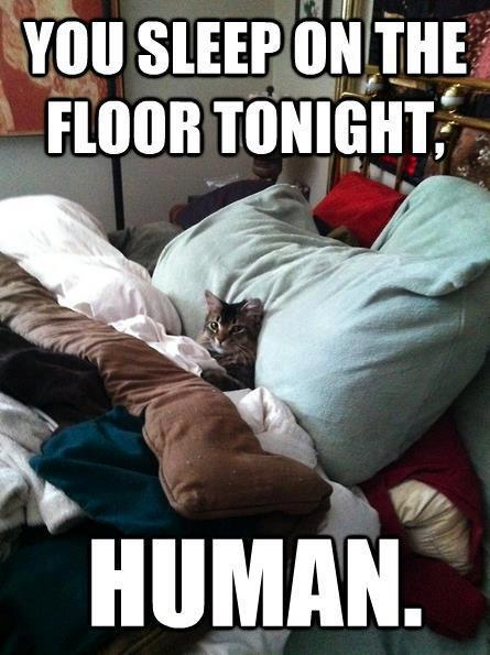 Cat is Sleeping in a Comfortable human Bed funny image