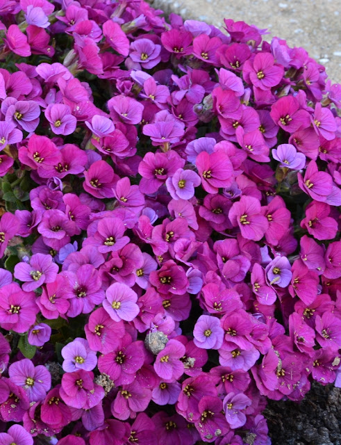 Garden in the spring