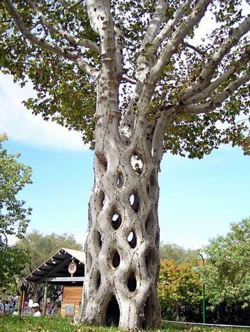 Árvore de Circo
