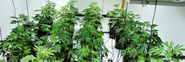 Pocket Hobby - www.pockethobby.com - #HobbyNews - Roubou água pra plantar drogas - e muito mais!