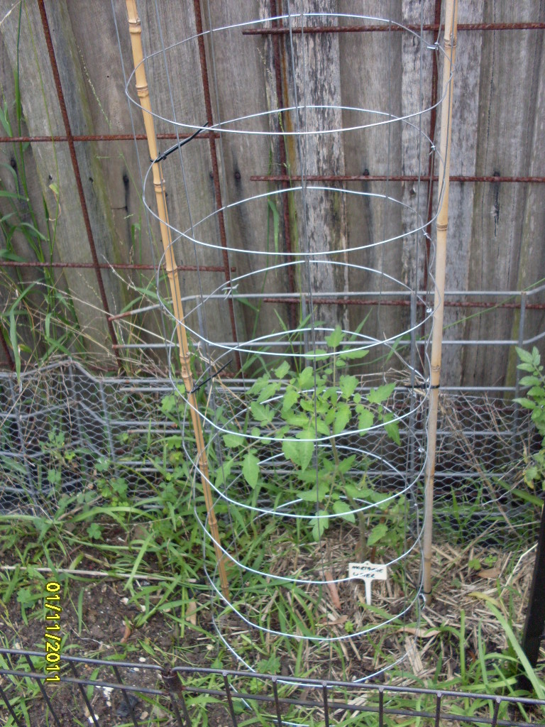 Just Like My Nan Made: Lawns, Tomato cages & Celery