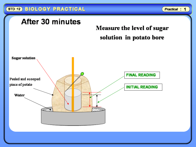 Physics Learn  Study of Osmosis by Potato Osmometer