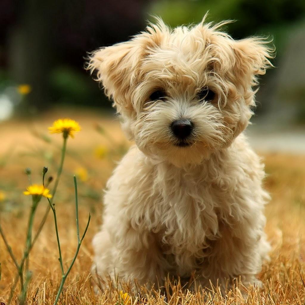 Download gambar anjing, dog pictures wallpaper