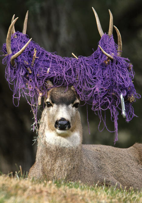 Welcome To Animal Cognizance Unusual Photographs Of Deer