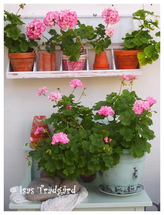 Torsång på kommoden i växthuset