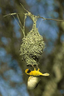 Birds Nests photos, pictures, Wallpapers, Images