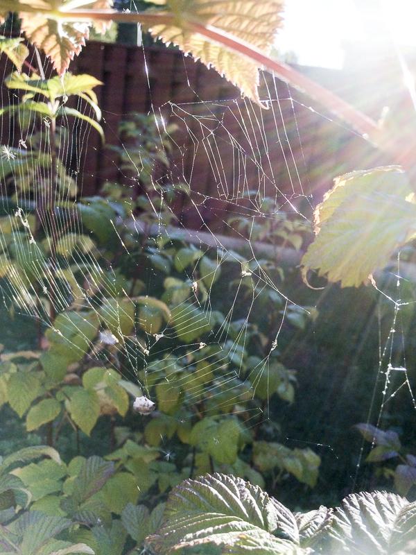 spindelväv, spindelnät