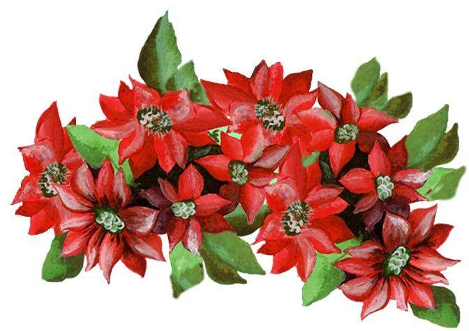 Imagenes antiguas flores para imprimir - Imagenes flores de navidad ...
