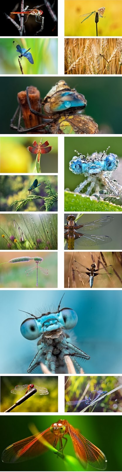 Dragonfly Theme For Windows 7 And 8 8.1