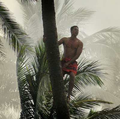 native climbing a balm tree in Hawaii