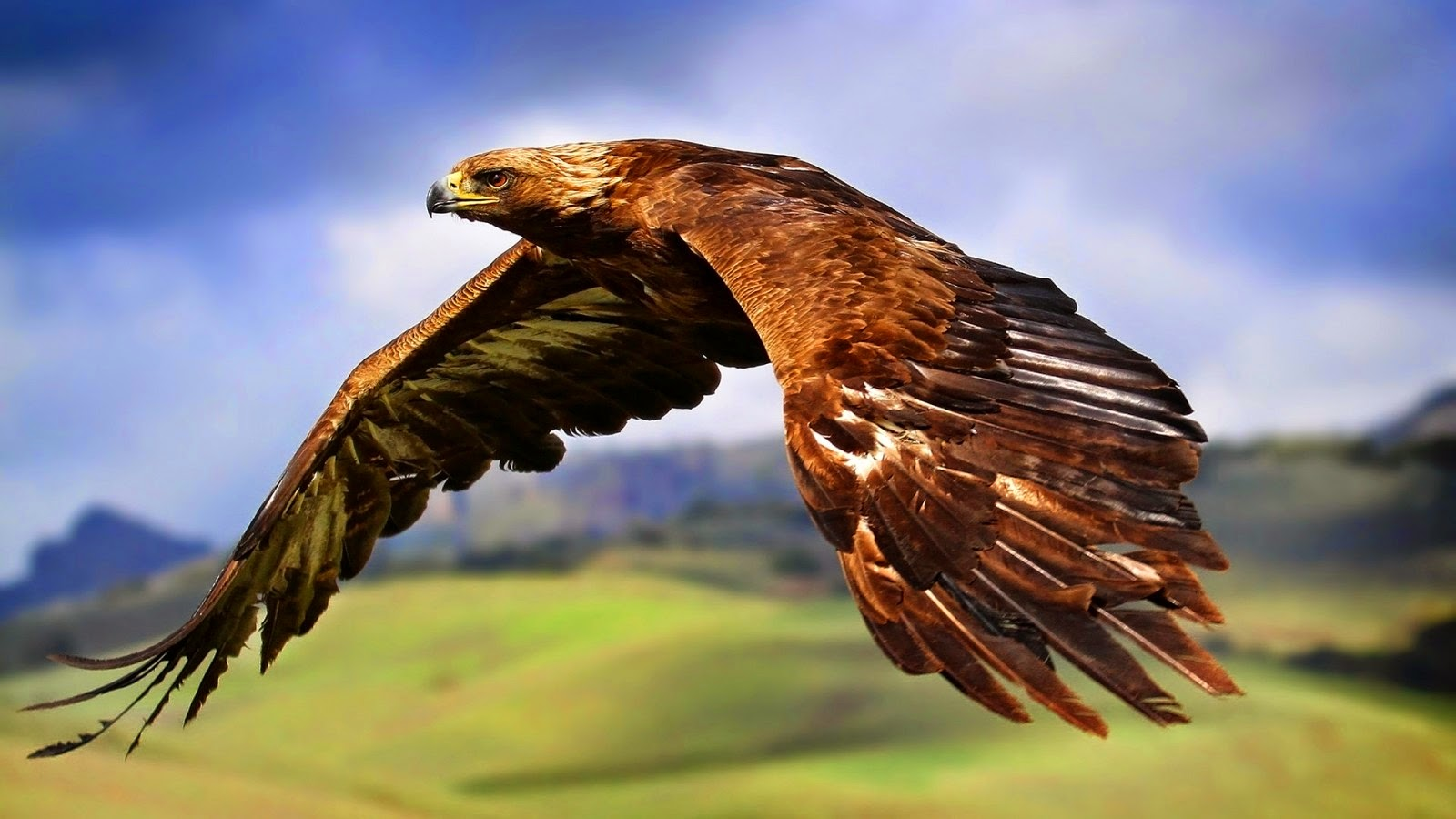 Beautiful Bald Eagle Wallpapers Free Download - FREE ALL HD ...