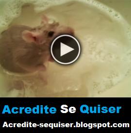 Você Já Viu Um Rato Tomar Banho? Esse Toma Melhor Que Muitos Humanos
