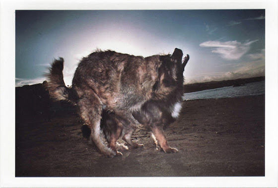 dirty photos - on the island of - photo of two dogs fucking at the beach