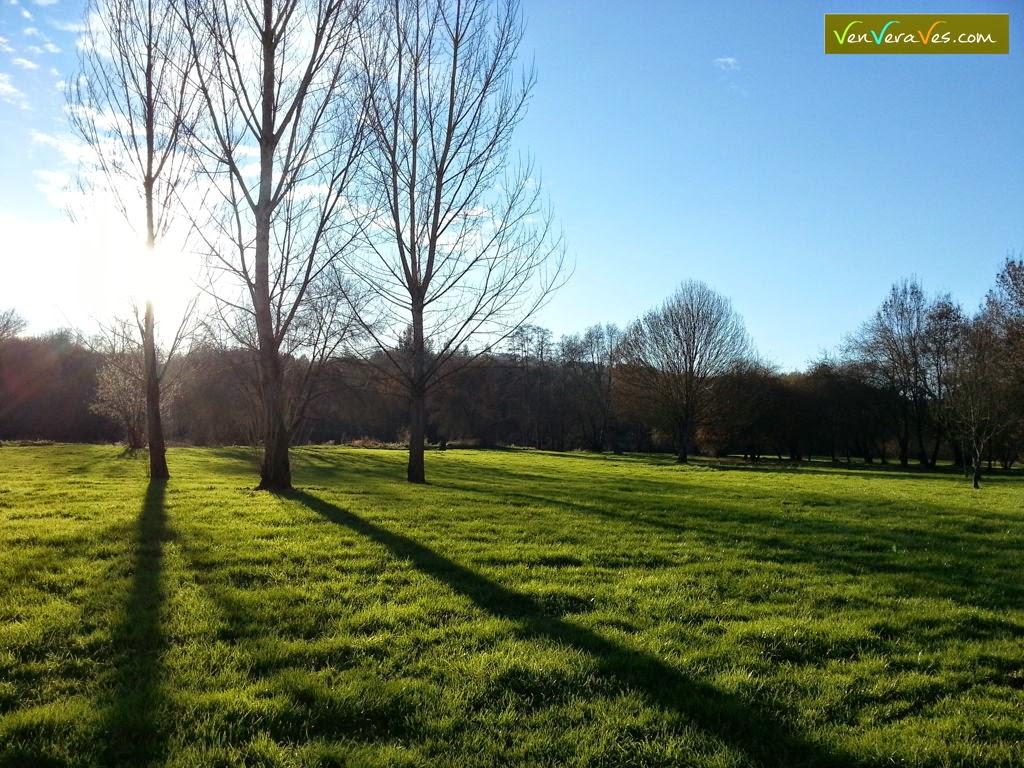 sol poñendose detras dunhas arbores no parque de A Tolda