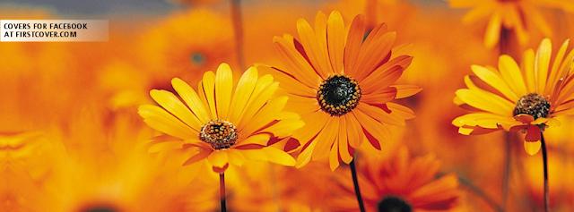 "<img src=""http://4.bp.blogspot.com/-EitiXjJlqZM/UfW7RANCYtI/AAAAAAAADAQ/AoA-L7aqLq4/s1600/orange_flowers-572.png"" alt=""Flower Facebook Covers"" />"