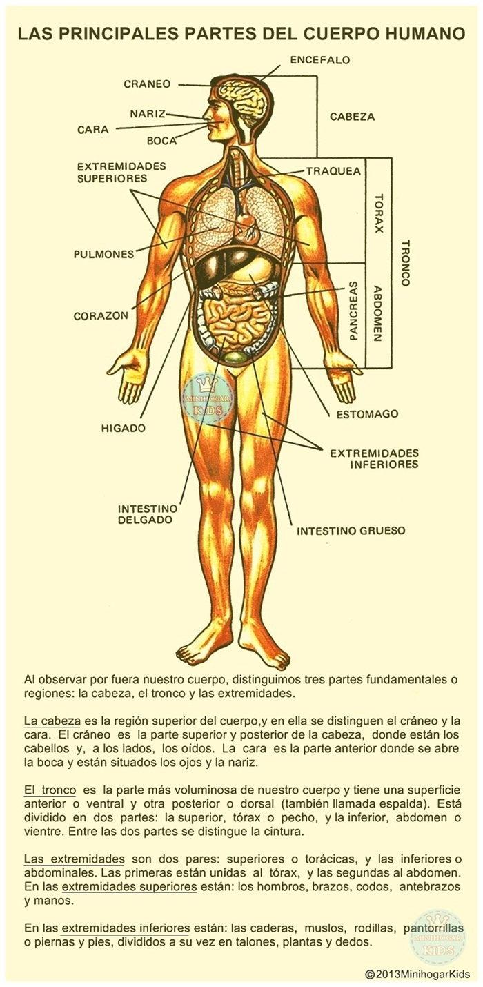 Hermosa Parte Del Cuerpo Inspiración - Anatomía de Las Imágenesdel ...