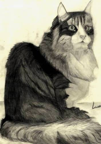 """""""Ode ao gato, onde há ódio ao gato"""". Arthur da Távola. Clique no desenho e leia o texto."""