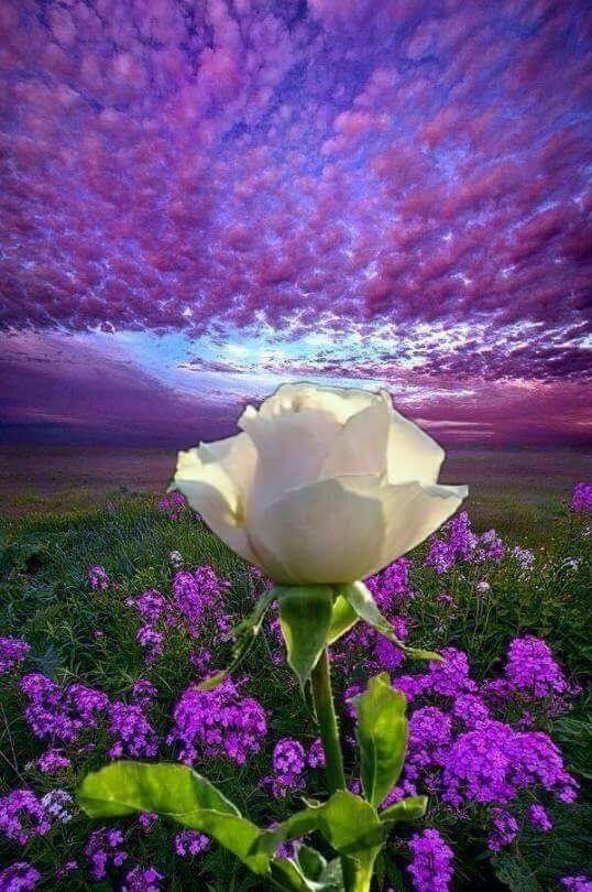 O esplendor da flor