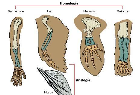 Anatomía comparada   Naturaleza asombrosa, maravillas naturales