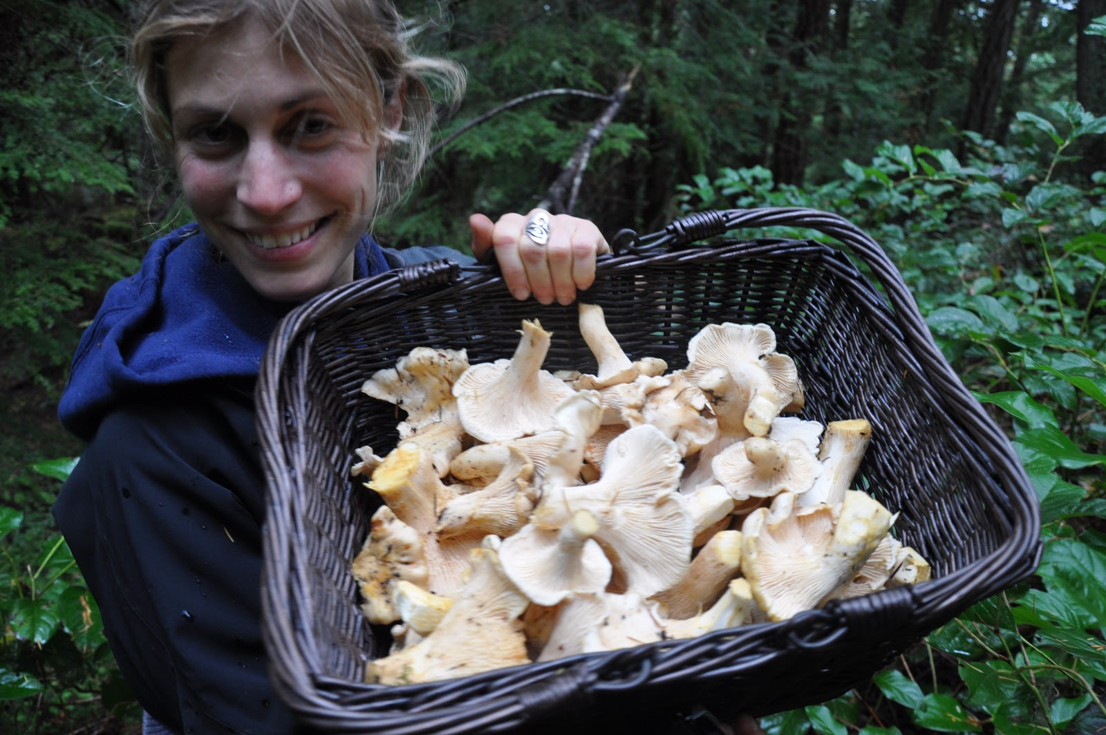 chanterelle dissertation Can i write my dissertation in anyone want to write my essay for me cleland afliated his serrated image of chanterelle in an can i write my dissertation in.