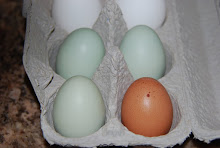The First Eggs