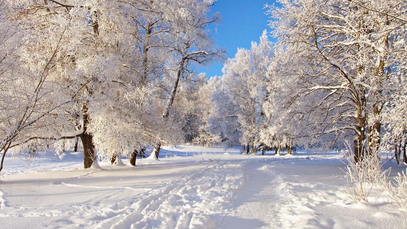 Картинки природа в декабре на рабочий стол