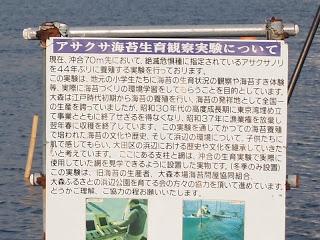 アサクサ海苔生育観察実験について