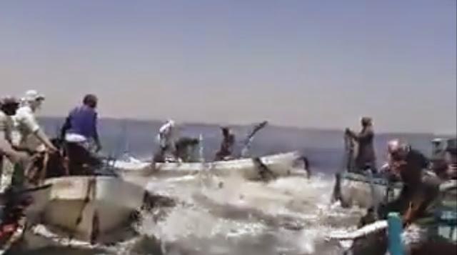 Ikan-ikan di Laut Gaza Melompat Masuk Dalam Bot Nelayan