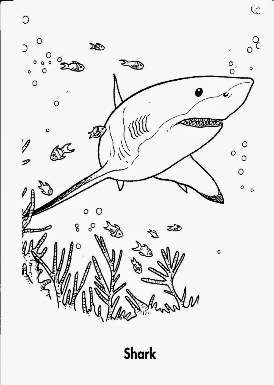 tiger shark coloring pages - coloring pictures of sharks free coloring pictures