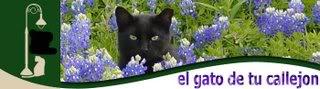 el gato de tu callejon
