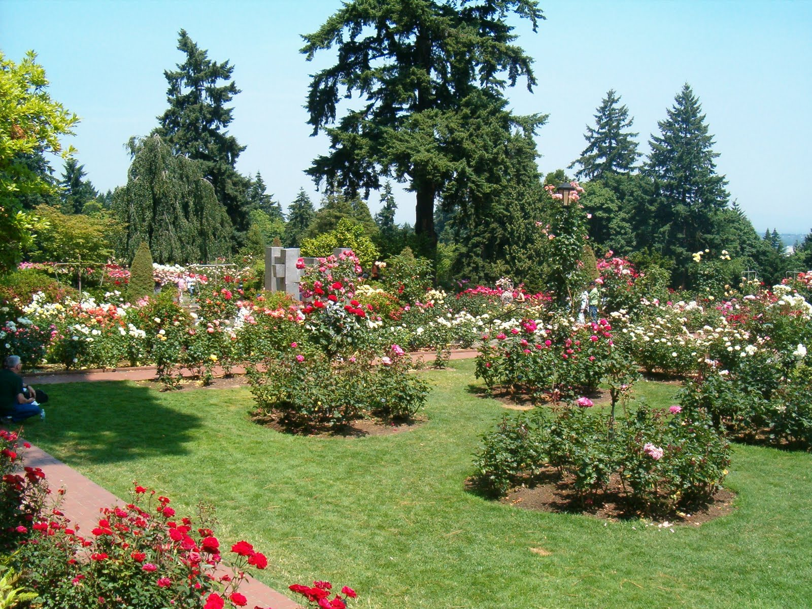 Julie 39 S Journeys Portland Oregon International Rose