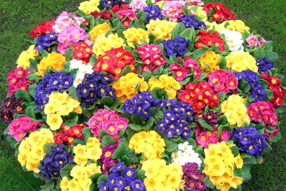 Цветы.клумбы своими руками