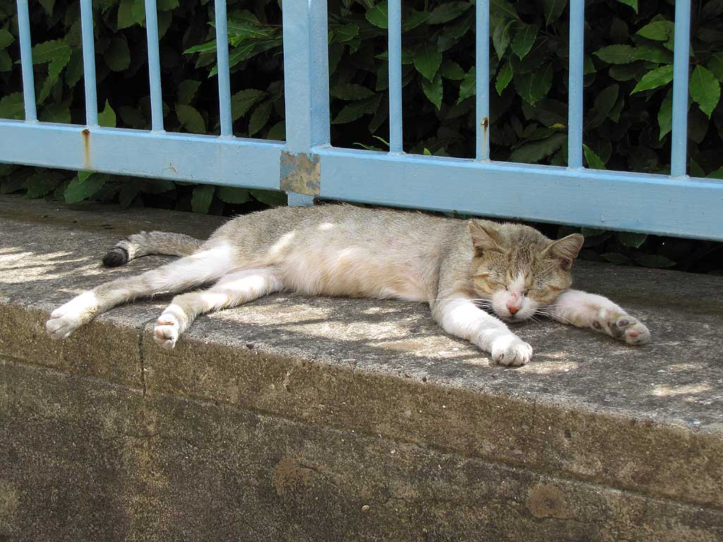 Cat napping in the shadow, Livorno