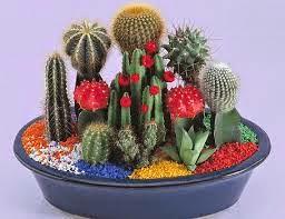 Monta un negocio de venta y mantenimiento de cactus