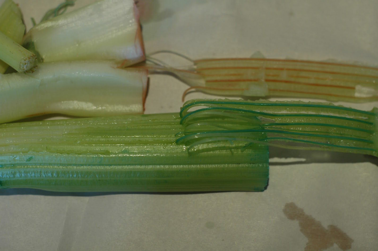 celery project This experiment will help you find out materials water red and blue food coloring 4 similar size stalks of celery with leaves (pale green inside stalks.