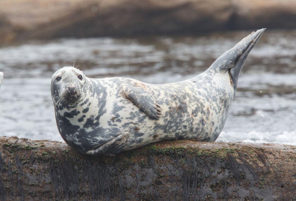 Yoga Seal